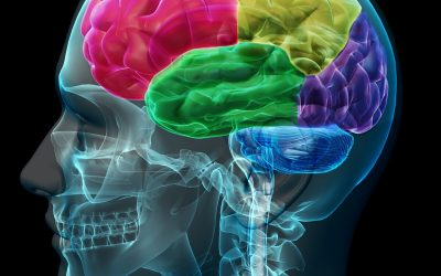 What Six Foods Can Hurt Your Brain?